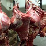 koeien-vlees